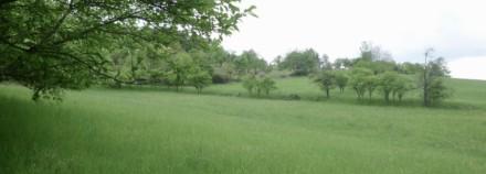 Permakulturní zemědělství v ČR