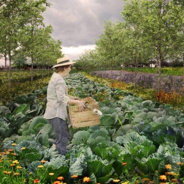 agrolesnický systém